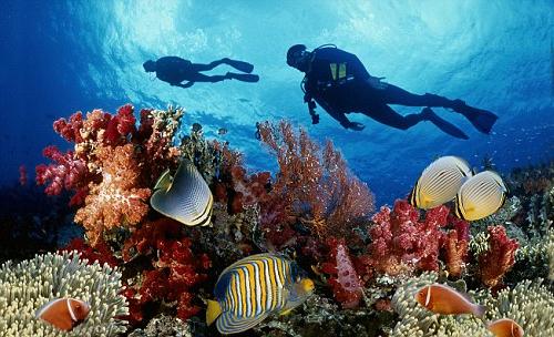 Lặn ngắm san hô Cát Bà