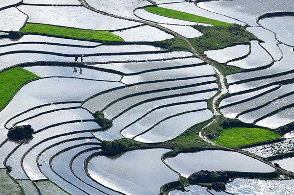 Những thửa ruộng trắng nước